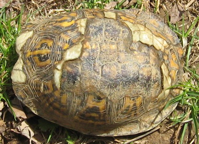 Is there anyway a tortoise's shell can be healed, when I ...